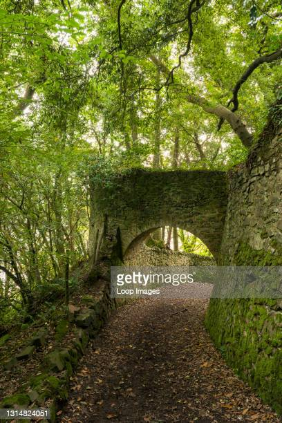 The tunnels in Yearnor Wood along the South West Coast Path in Exmoor National Park.