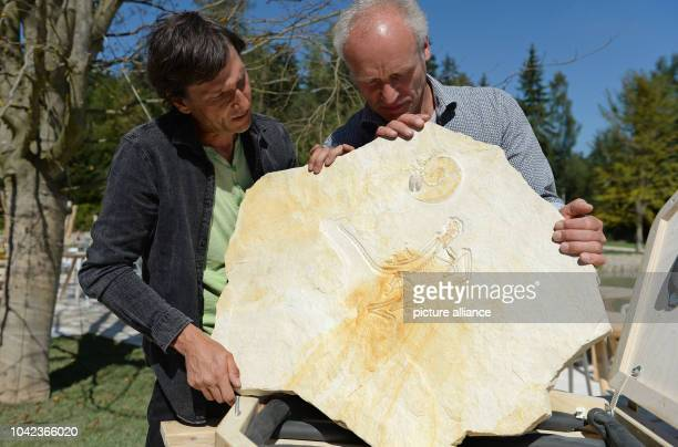 The two owners Michael Voelker and Raimund Albersdoerfer show off an approximately 153 million year old Archaeopteryx in the Dinosaur Freilichtmuseum...