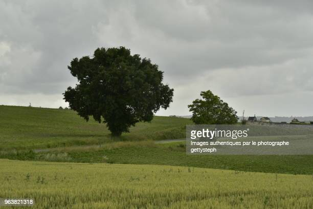 The two trees near rustic cemetery along narrow road ,in middle cultivated lands under thunderstorm