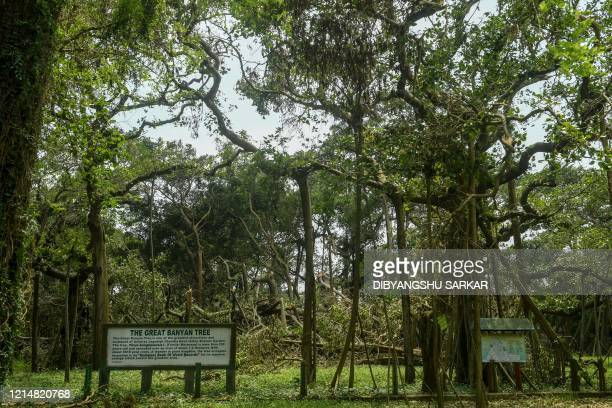 The twocenturiesold Great Banyan Tree is seen ravaged following the landfall of cyclone Amphan at the Indian Botanical Garden in Kolkata on May 24...