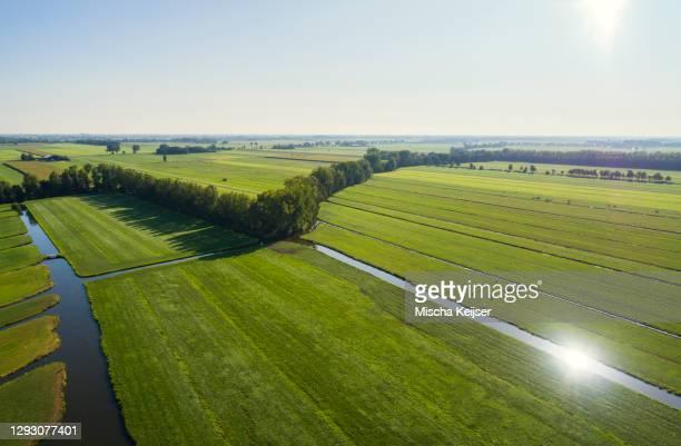 the typical dutch polder landscape at the end of summer, langerak, zuid-holland, netherlands - 干拓地 ストックフォトと画像