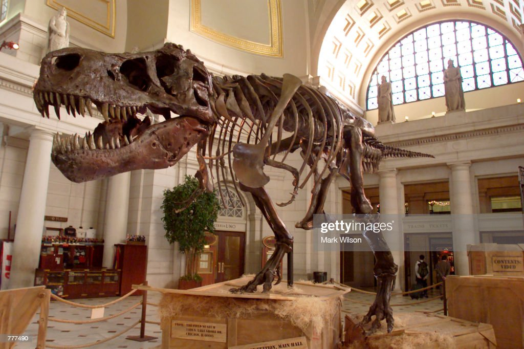 Sue the Tyrannosaurus Rex on Display in Washington D.C. : News Photo