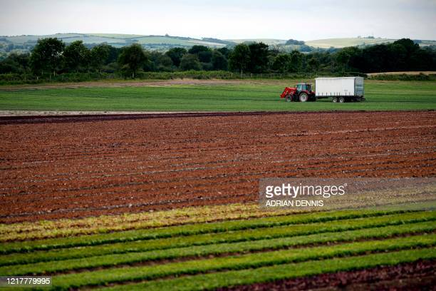 The UK Seasonal Relief Team working for The Watercress Company operate the cutting machine to harvest spinach on farmland near Dorchester in southern...