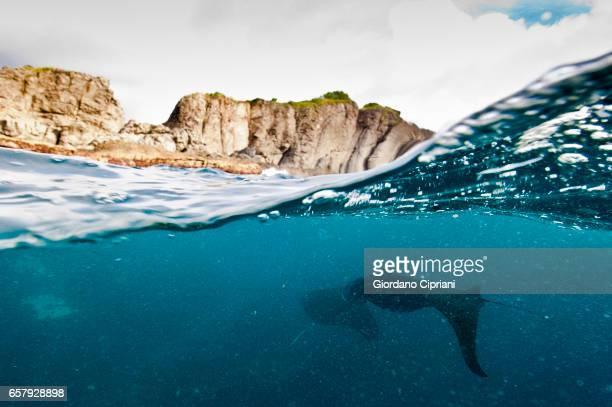 the undersea world of komodo. - dasiatide foto e immagini stock