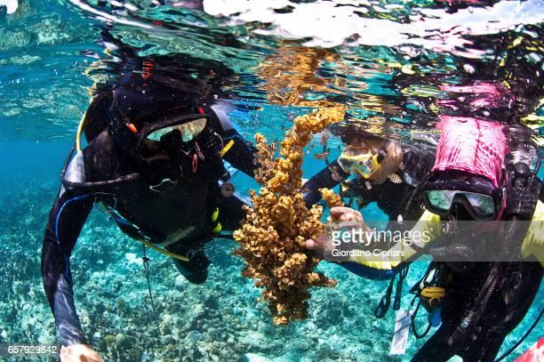 The Undersea World of Komodo.