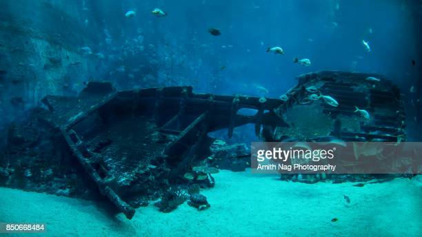 The underwater shipwreck