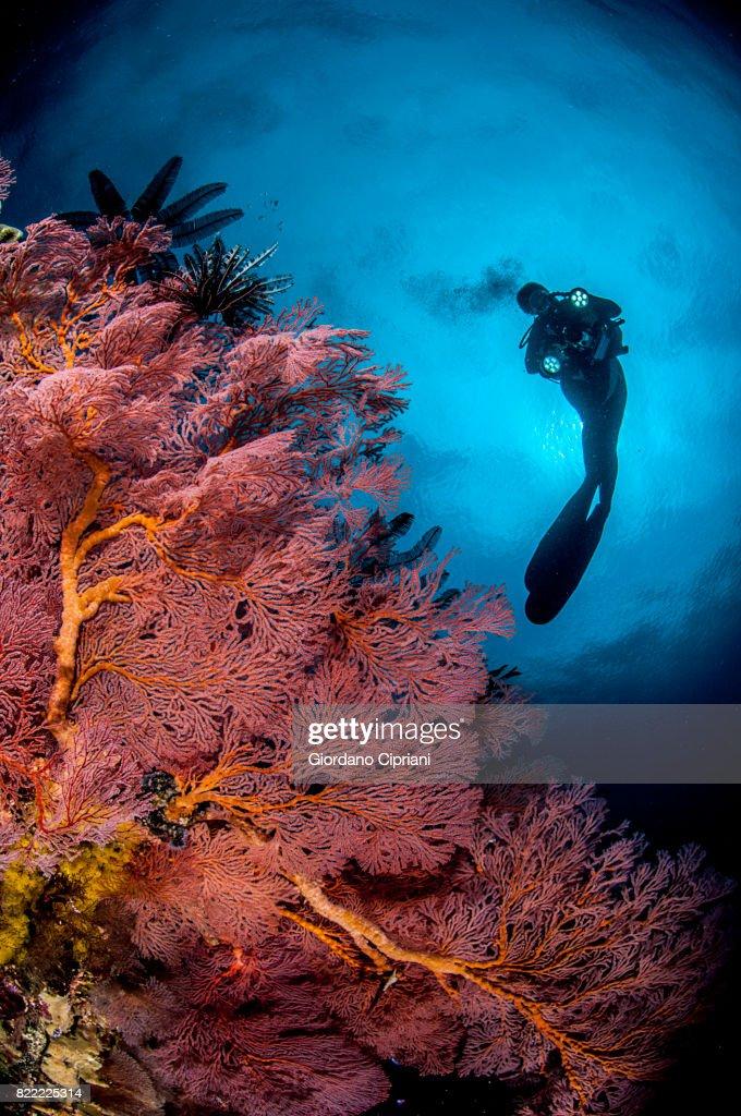 The underwater world of Gili Islands, Lombok, Indonesia. : Stock Photo