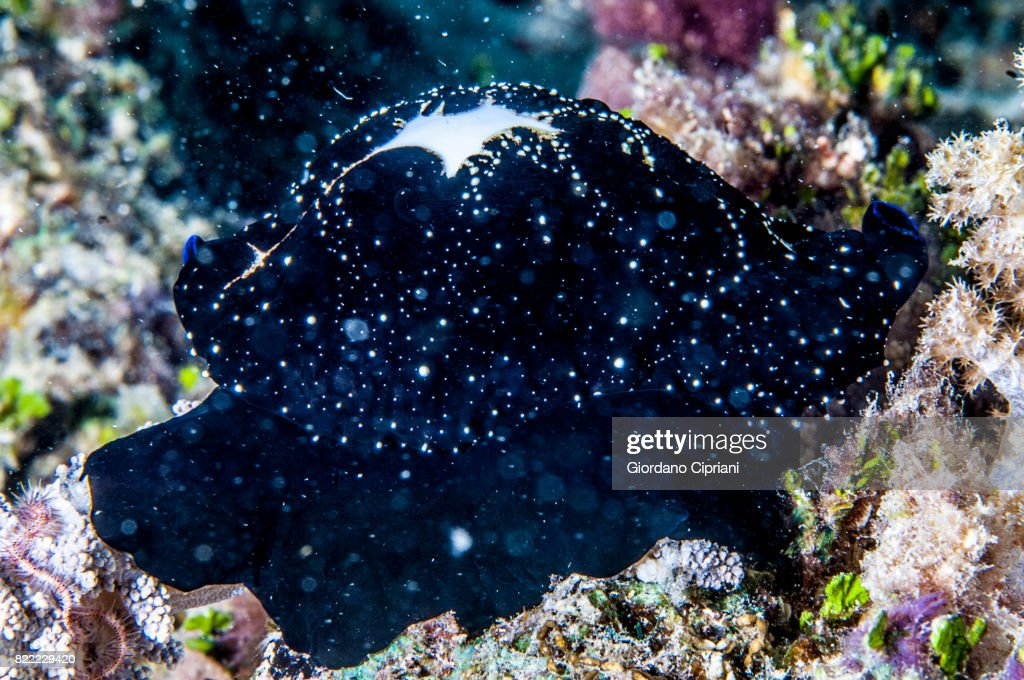 The underwater world of Gili Islands, Lombok, Indonesia. : Stock Photo