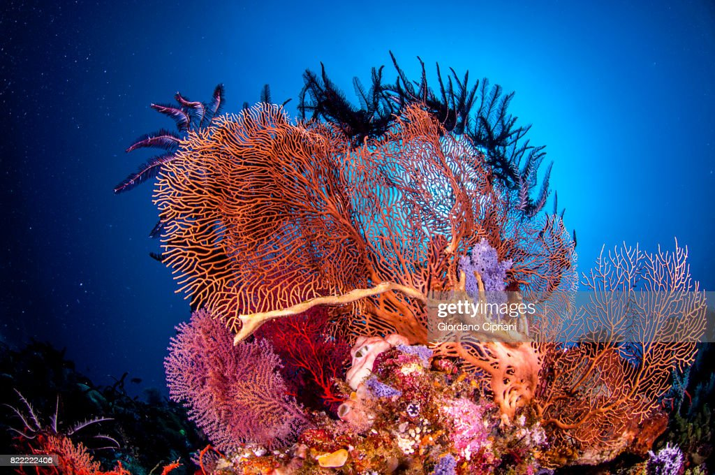 The underwater world of Java Sea, Gili Islands, Lombok, Indonesia. : Stock Photo