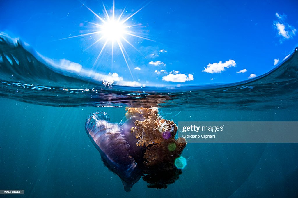 The underwater world of Maldives. : Stock Photo