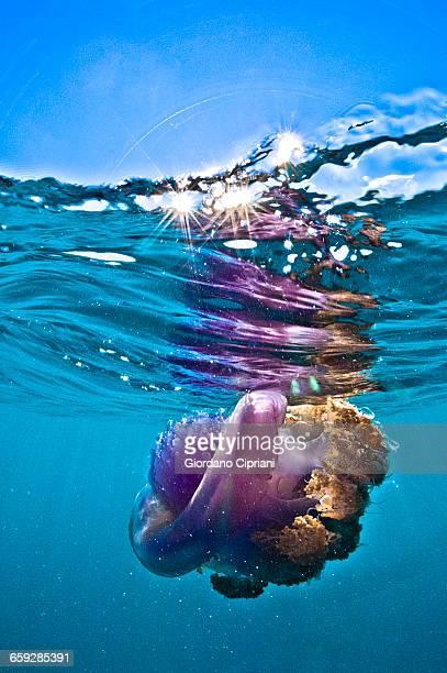 The underwater world of Maldives.