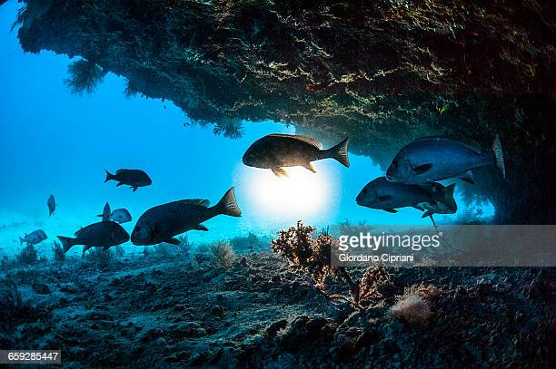 the underwater world of maldives. - fonds marins photos et images de collection