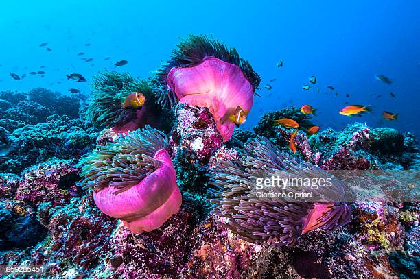 the underwater world of maldives. - reef stock pictures, royalty-free photos & images