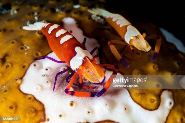 The Underwater world of Philippines, Southeast Asia, western Pacific Ocean.