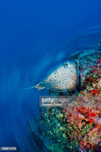 The underwater world of the Cocos Islands.