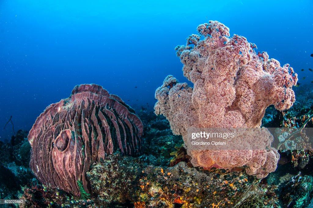 The underwater world of the Philippines. : Stock Photo