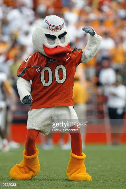 The University of Miami Hurricanes mascot, Sebastian the Ibis, excites the fans during the game against the University of Tennessee Volunteers at the...