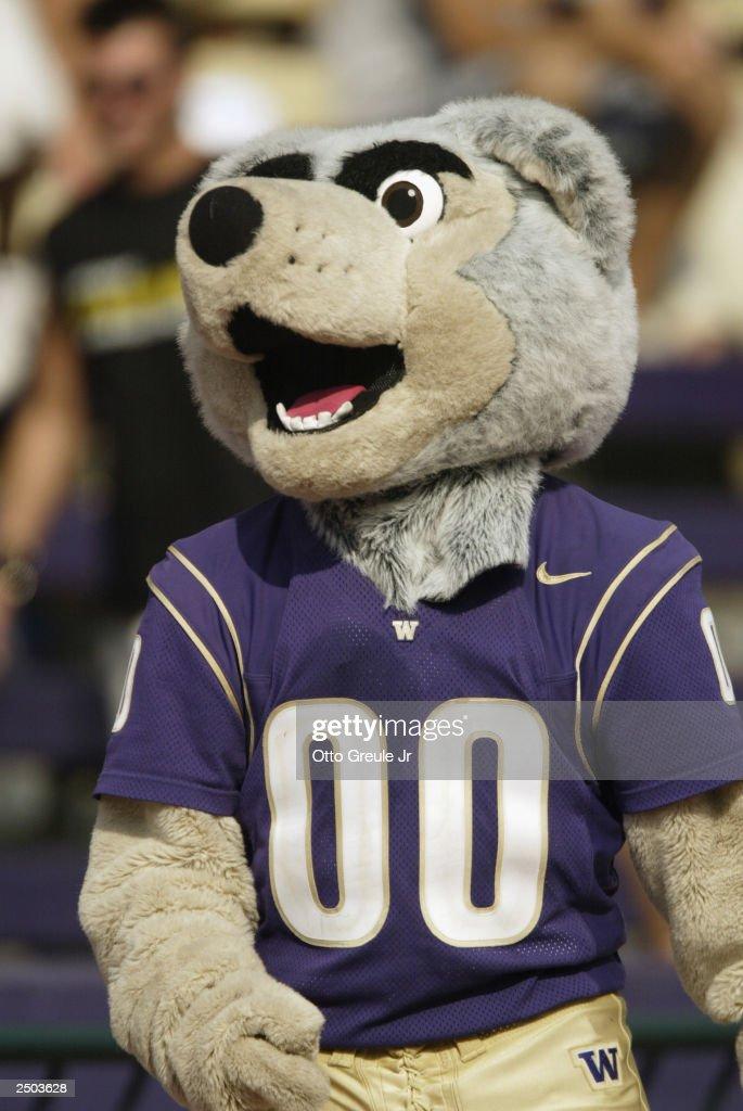 the university of washington huskies mascot walks the sideline