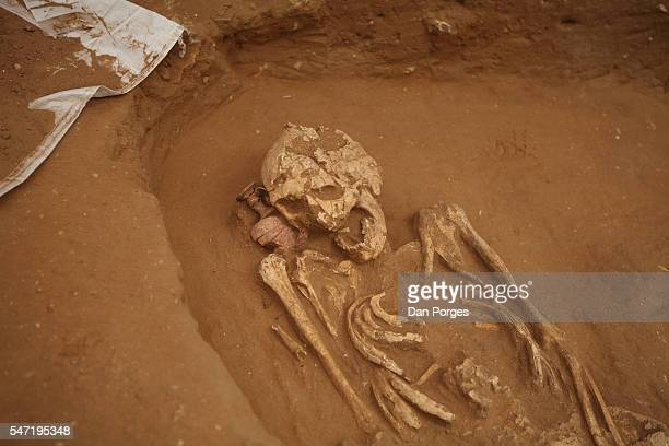 The upper part of a skeleton found in an archaeological dig at an 11th to 8th centuries BCE site of the first Philistine cemetery ever to be found,...