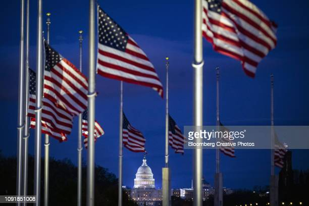 the u.s. capitol is seen through american flags flying at half staff - united states capitol rotunda stock pictures, royalty-free photos & images