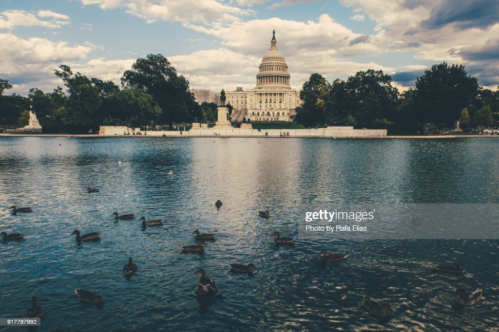 The US Capiton building and pool with some ducks : Stock Photo