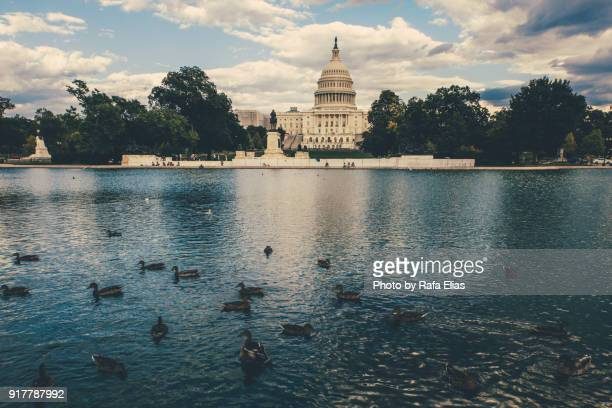 the us capiton building and pool with some ducks - politics and government stock pictures, royalty-free photos & images