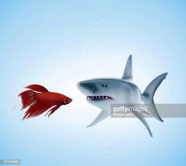 o habitual suspeitos - tubarão branco - fotografias e filmes do acervo