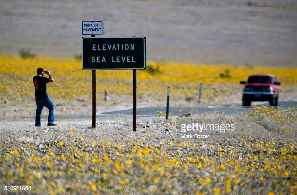 The usually barren landscape around the popular Sea Level sign along Hwy 190 in Death Valley National Park is now a little more colorful thanks to a...