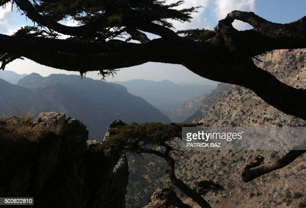 The valley of Tannourine in northern Lebanon is seen through the branches of a Cedar tree on December 27 2015 AFP PHOTO / PATRICK BAZ