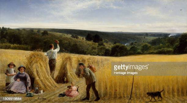 The Valleys Stand Thick With Corn, 1865. The title is taken from the Bible, Psalm 65. Artist Richard Redgrave. .