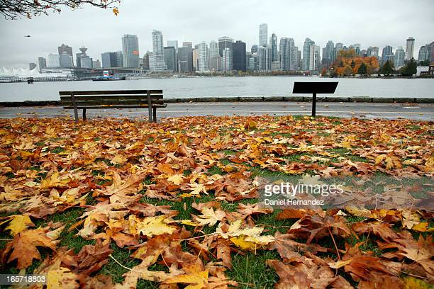 CONTENT] The Vancouver skyline from Stanley Park on an autumn day