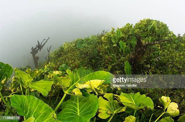 Saba Island, Netherlands Antilles.