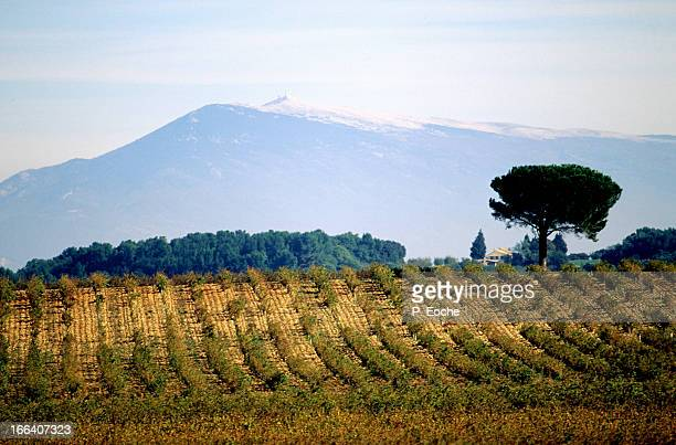 The Ventoux Mount and wine AOC vineyards