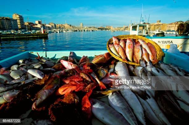 The Vieux Port, Marseille, Bouches du Rhone, France