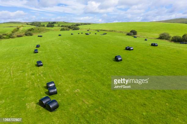 the view from a drone of round bales wrapped in black plastic in a fiedl in rural dumfries and galloway, south west scotland - johnfscott stock pictures, royalty-free photos & images