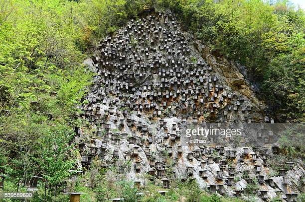 The view of beehives on the cliff in Shennongjia nature reserve in central China's Hubei province on 27th April 2015