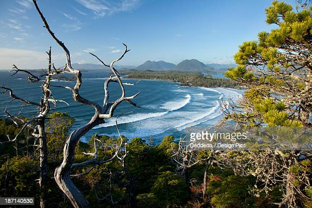 The View Of Cox Bay And Surrounding Mountains And Temperate Rainforest Near Tofino