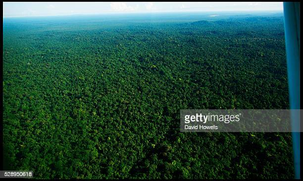 The view of the jungle from a Trans Guyana Airways cessna caravan while flying from Georgetown to the jungle town of Port Kaituma, Guyana. The town...