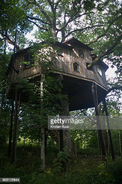 The view of the the tree house built by Anni Ravn near KostaSweden 7th of August 2016 The house is 6 mter up with two bed rooms and an amazing view...