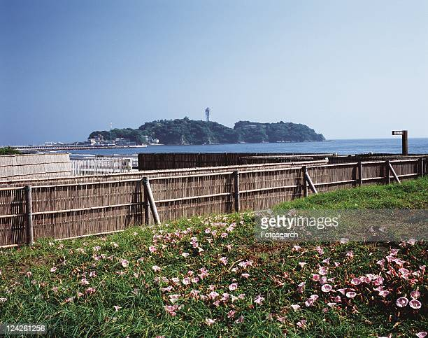 The View, Pan Focus of Enoshima Island from Kugenuma Beach, Shonan, Kanagawa Prefecture, Japan, Front View, Pan Focus