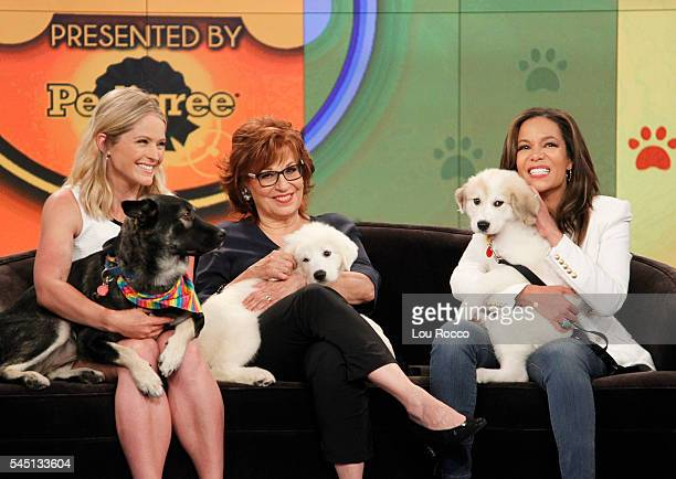 THE VIEW The View's Eighth Annual Mutt Show airs Friday July 1 2016 airing on the Walt Disney Television via Getty Images Television Network HOSTIN