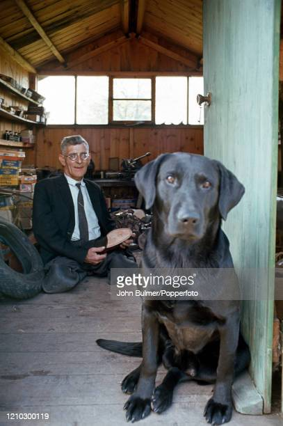 The village cobbler Emrys Vaughan, disabled since birth, at work in his workshop with his black labrador for company at Pembridge in England, circa...