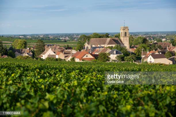 the village of pommard, cote de beaune, burgundy, france - village stock pictures, royalty-free photos & images