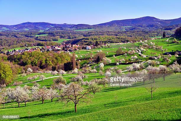 The village of St. Pantaleon surrounded by blossoming cherry trees, Nuglar, Canton of Solothurn, Switzerland