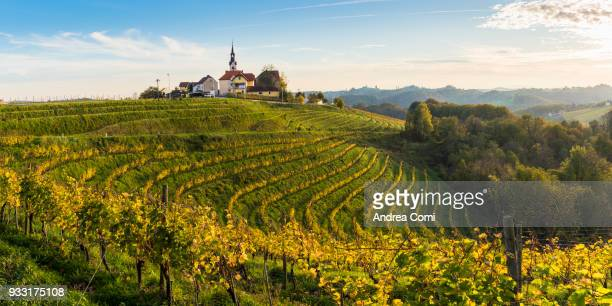 the village of svetinje and its vineyards at sunset. svetinje, ormoz, drava region, slovenia - slovenië stockfoto's en -beelden