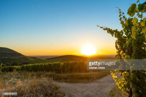 the vineyards around the city of colmar, france. - ベルジュラック ストックフォトと画像