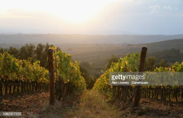 The vineyards at Castello di Brolio are seen near Siena on October 26 2018 in Tuscany Italy