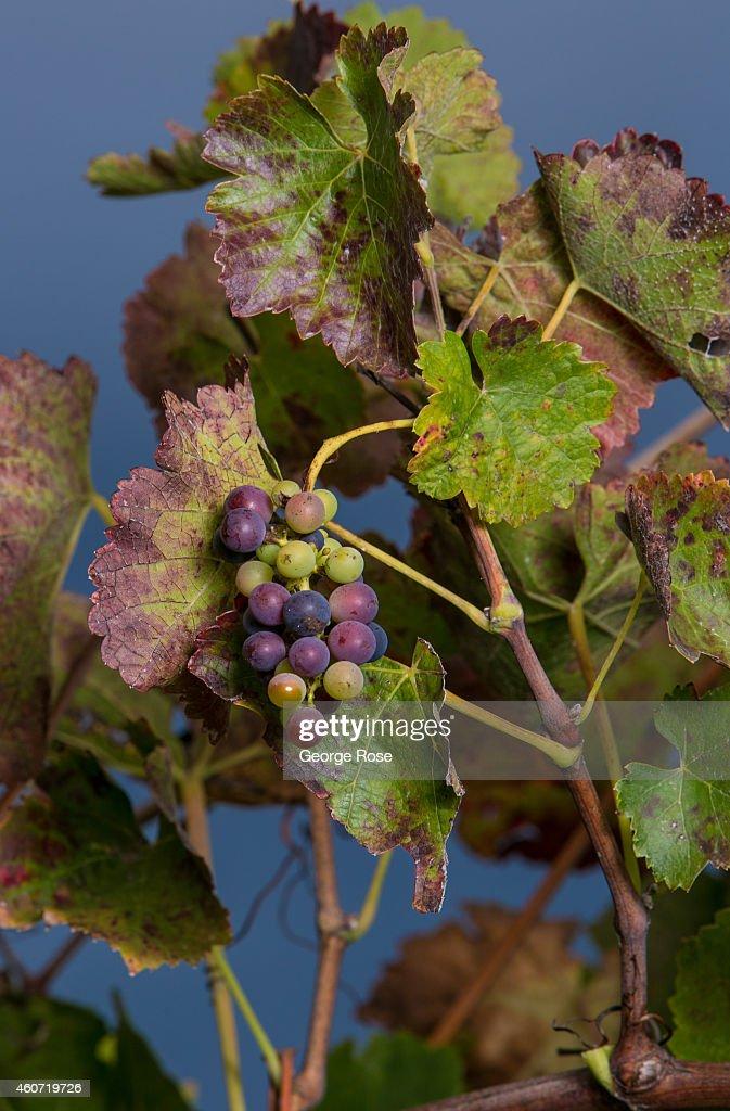 Exploring California's Sonoma County Wine Country : News Photo