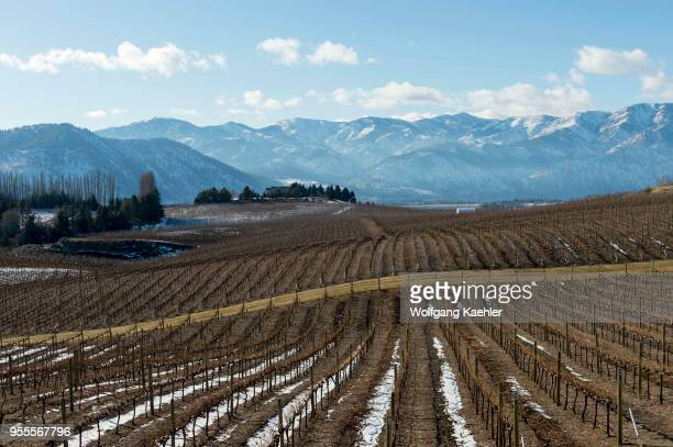 The vineyards in the winter at the Benson winery a Mediterraneaninspired estate winery overlooking Lake Chelan in Eastern Washington USA