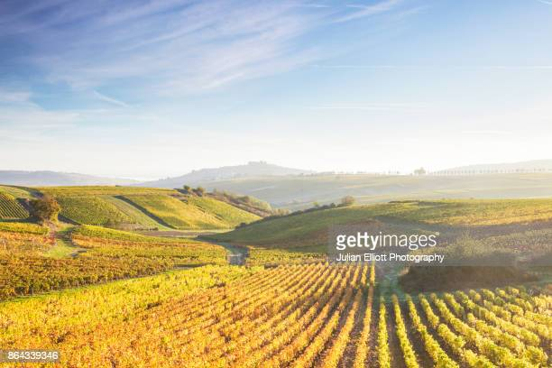the vineyards of sancerre during autumn in the loire valley, france. - loire valley stock pictures, royalty-free photos & images